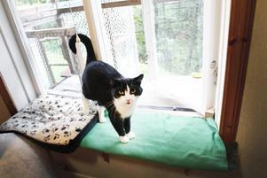 har fått ett hem. Hutti är en av katthemmets katter som blev tingad under gårdagens öppet hus.pratglad. Helga är en riktig piplisa som gärna pratade med Arbetarbladets fotograf när vi besökte Gästrike Katthem.