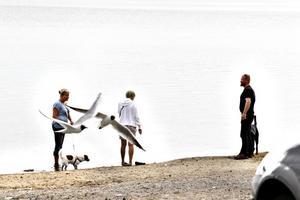 Stör. Trots den vackra utsikten över sjön tycker flera gäster att måsarna och de många kanadagässen drar ner rastplatsens betyg något.
