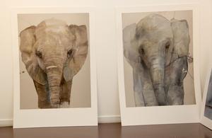 Porträtt av elefanter ingår i utställningen.