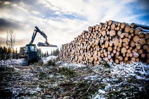 Slutavverkning i det planerade naturreservatet i Offerdalsberg och Almåsa.