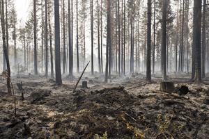 Skogsbranden ställde till stor förödelse och kostade hundratals miljoner att ersätta.