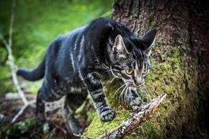 Katten Ellie håller sig nära Rania i alla lägen, både inne och när de går i skogen.
