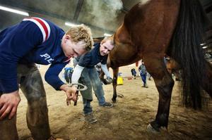 Daniel Ahlberger och Sven Lindqivst samarbetade var väl samarbetade i arbetet med att sko en häst.