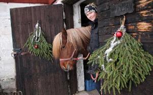 Kórall ska bli avelshingsten på gården. Micaela Åhlberg satsar på islandshästar och är tävlingsryttare. Foto: Eva Högkvist