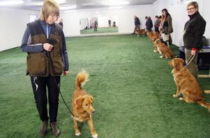 Duktig hund. Lena Skugge belönar sin hund Brage för en lyckad övning.