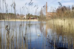 En idyll i Hälsingland, men under ytan fanns det gifter insåg miljöforskare Monica Lind