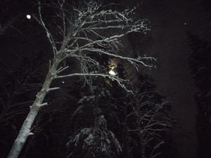 Skogpromenad 2009 års sista skälvande minut i bitande kyla, månsken och gnistrande snö.