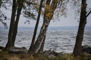 Höstdagen är riktigt tuff på Hjälmaren, men Hans Johansson, ordförande för Hjälmarens fiskarförbund, trivs. Vi anar honom långt ut på Strohjälmaren när han snabbt kommer in till sin hamn i Sandshagen. Göksholm.
