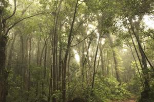 """Eha Kern har varit på besök i en räddad regnskog i Guatemala. """"Folk här nere undrar ofta hur eleverna i Sverige kunde bry sig om just deras skog, det är ju så långt borta"""", säger hon. Foto: Hakon Wikström"""