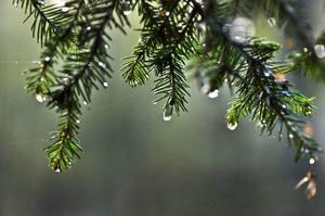 Vi bör notera att luftens högre halt av koldioxid haft många gynnsamma effekter. Det är livets gas, som växterna fått lättare att tillgodogöra sig. Skördarna har blivit större, skogen har växt snabbare, öknarna har blivit mindre, skriver Sture Åström som inte tror på klimatforskarnas varningssignaler.