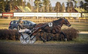 Björn Karlssons Tangen Haap var mångas bank på V5-spelet. Femåringen motsvarade förväntningarna och gick undan till en klar seger över upploppet. Hästens tionde seger på 24 starter.