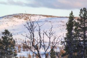 Sonfjället i vinterskrud.
