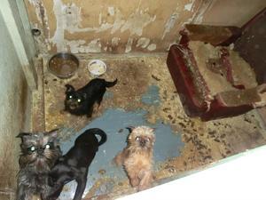 De senaste sex åren fram till mars i år, har 173 hundar omhändertagits av Gävleborgspolisen.