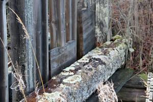 Det murkna virket har blivit grogrund för mossor och lavar.