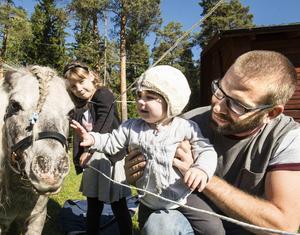 Hästens dag på Norra Berget avslutar året djursäsong. Amerikanska miniatyrhästen Golly var uppskattad av de mindre barnen. Här får hon en klapp av Ilse Helmsäter 1 år, som besöker dagen med storasyster Tuvalisa, 6 år, och pappa Kristofer.