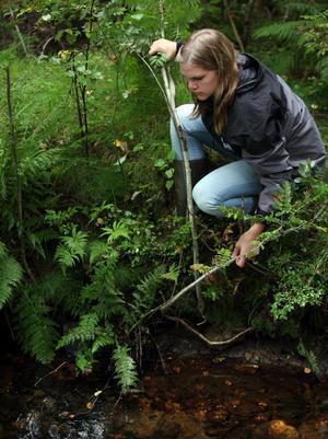 Anna Hansson kollar hur det ser ut med musslor i bäcken.