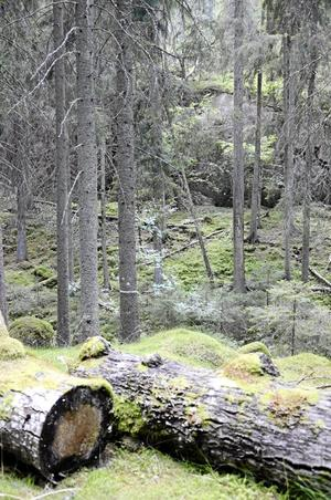 Naturreservatet Viken.