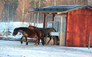 Jaha, då var det färdigkäkat, konstaterar dessa hästar som varit inne och ätit på egen hand X