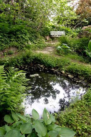 Vattenspegel. I den djungelliknande trägården har Tore även anlagt två dammar med näckrosor.