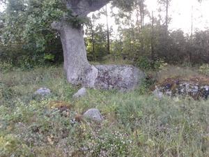 Såg detta träd på en kvällspromenad tillsammans med min sambo Lennart och min syster Lena. Trädet och stenen ser ut som om de har vuxit ihop. Ser nästan ut som ett förstenat skogsväsen