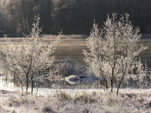 Frostiga träd vid Kolbäcksån.