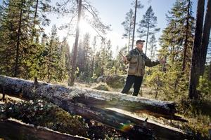 En skog i Sollefteå med många ståtliga tallar och en hel del död ved. Tydligt präglad av många skogsbränder, berättar Lasse Bengtsson