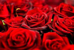 Röda rosor är extra populära en dag som denna. Men den höga efterfrågan gör också att priserna stiger.
