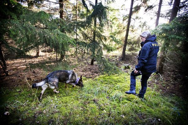 På jakt efter guldsmycken i en skogsdunge utanför Uppsala.