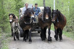 Det är en ståtlig syn, när Diana Sandell och Lars Danhard är ute och kör med alla sina nordsvenska hästar på vägarna runt gården i Silfors.