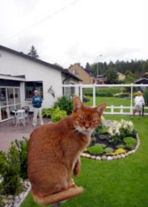 Abbe sitter och spanar från sin favoritplats på toppen av klätterträdet — helikopterplattan. I bakgrunden står Rune och Kickan Bergman.