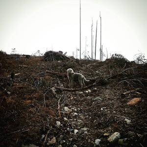 PÅ INSTAGRAM. Samtidigt nånannanstans. #ärdethärskog?