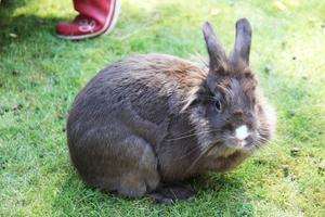 Kaninen Sigge.
