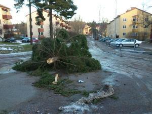 Julgranen på Lustigknoppsvägen i Falun föll under nattens oväder.
