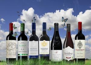 Utbudet av ekologiskt vin har ökat markant under senare år, liksom försäljningen. Vår vinexpert konstaterar att kvaliteten är tämligen ojämn, men att den blivit bättre. På bilden några av de allra bästa röda ekoköpen. Foto/montage: Sune Liljevall
