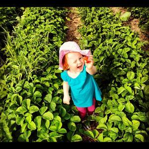 Längtan är över. Äntligen fanns det jordgubbar och Frida 2,5 år hittar en stor!