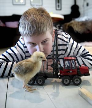 En rolig lekkompis tycker Arvid att kycklingen Ernst är och han får gärna vara med när det vankas traktorkörning.
