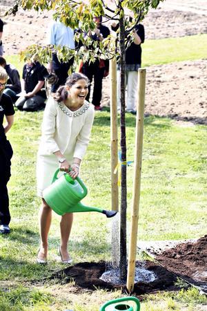 Under besöket vid Wij Trådgårdar fick Victoria och Daniel ett Bergskörsbärsträd i gåva. De fick själva plantera det och Daniel lovade att komma förbi och vattna nästa gång de är ute och går i området.
