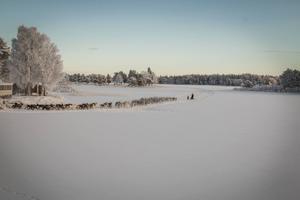 Det var dag 8 av 10 för renhjorden på väg mot vinterbetet utanför Stugun.