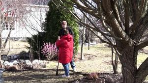 För Bitte Nilsson i Hörnett utanför Örnsköldsvik är vårstädningen i trädgården mest krattning av rabatter.