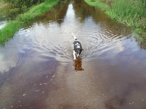 I sommar har vägen över Kusmossen i Virsbo legat under vatten. Detta har enligt gamla Virsbobor aldrig hänt tidigare sommartid. Huvudorsaken är bävrarnas aktiviteter i den intilliggande Lövviksbäcken. Bäverdammarna i bäcken har stoppat bäckens flöde så att mossen inte kan tömma sitt vatten, som rinner till från andra hållet, den vägen. Men lite vatten är inget som bekymrar en Jack Russel.