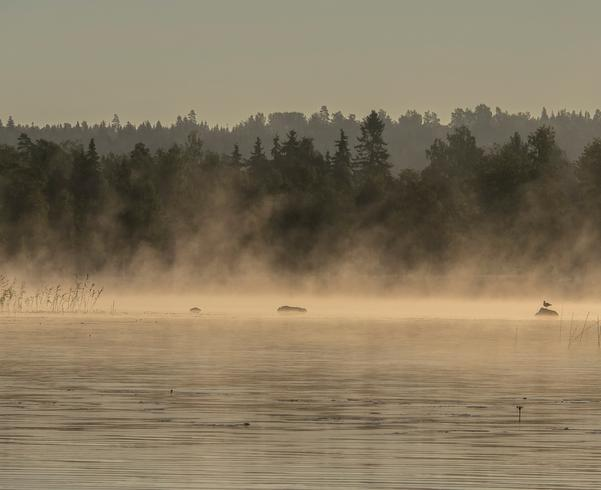 En disig morgon vid sjön Noren i Norberg