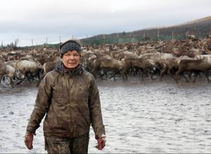 - Renstammen är mycket nära en kollaps på grund av de ökade rovdjursskadorna, säger Marianne Persson.