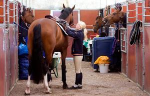 Man kan ju undra vad Tzigge, till höger, har att säga till sina kompisar om årets uppställning på Strömsholmstävlingarna, men han verkar glad. Tzigge och de andra hästarna tillhör hoppryttaren Ann-Sofie Oscarsson. Ryttareleven Ellinor Ekström är i full färd med att sadla La Vita eBella.