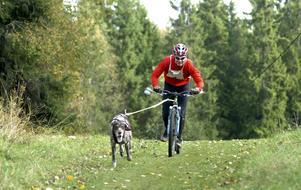 Undan för ess. Roger Larsson och hunden Eliott i en stilstudie ute på banan.