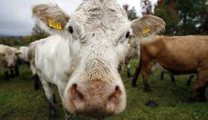 Förbud mot att genomföra sexuella handlingar med djur