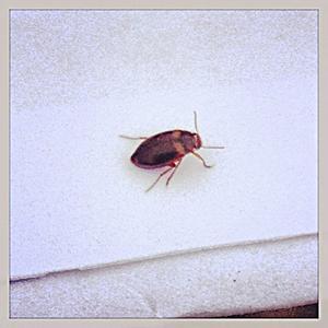 En kackerlacka. Foto: Privat