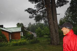 Kommunen får varje år in omkring 500 ansökningar om att träd ska fällas. Endast 25 blir godkända.