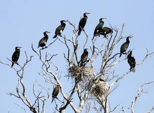 En dålig skarv är en dålig skarv vare sig det är i antennkabeln eller i träden.
