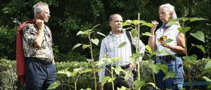 Bertil Örtendahl och Oscar Gomez-Denis, båda Sundsvall, diskuterade hampans användningsområden med trädgårdsmästaren Carina Frost. I juli 2010 ska Oscar Gomez-Denis tillsammans med en svensk brigad besöka Venezuela och han tänkte föreslå hampa som en alternativ gröda för att utveckla landets jordbruk.
