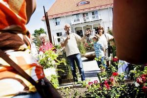 gav råd. Rosexperten Lars-Åke Gustavsson fanns på plats både för att hjälpa till med artbestämning av besökarnas medhavda rosor och för att guida i rosträdgården. Han tipsade om att låta en ljuvlig honungsros klättra i ett gammalt fruktträd och uppmanade besökarna att inte glömma bort de engångsblommande rosorna, som blommar med en enorm blomsterprakt men under en begränsad tid.